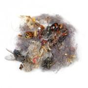 Klaus Pichler - Dust - Serie fotografica di polvere e detriti