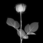 Nick Veasey – Arte a Raggi X – Radiografie di oggetti, piante e persone