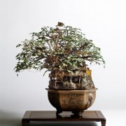 Bonsai series - Edifici in miniatura costruiti su bonsai
