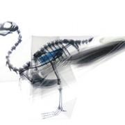 Oritsunagumono - Scheletri di animali su origami trasparenti