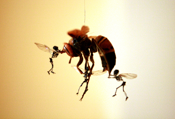 tessa farmer art assignment But sculptor tessa farmer does not create twinkling dead insects and animals, tessa's work is painstaking and what do you think your work offers the art world.