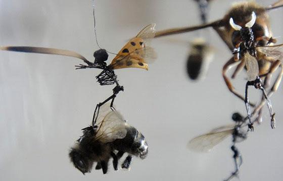 Tessa Farmer - Insect Art