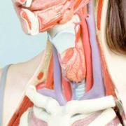 Koen Hauser - Modische Atlas der Anatomie