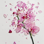 Jon Shireman – Broken Flower – Fotografie di fiori frantumati