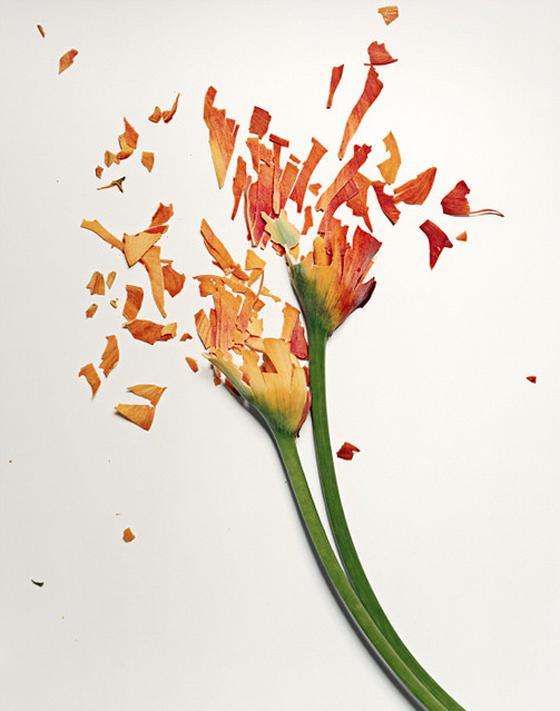 Jon Shireman - Broken Flower - Fotografie di fiori frantumati