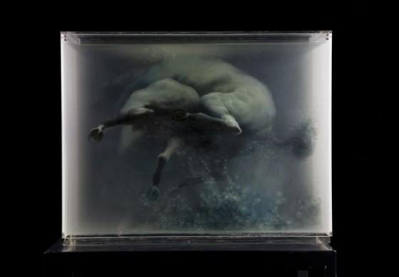 Xia Xiaowan - Dipinti 3D su lastre di vetro