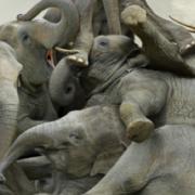 Branchi - Fotografie surreali di animali ammassati