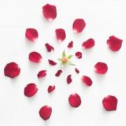 Fong Qi Wei - Exploded Flowers - Fotografie di fiori scomposti