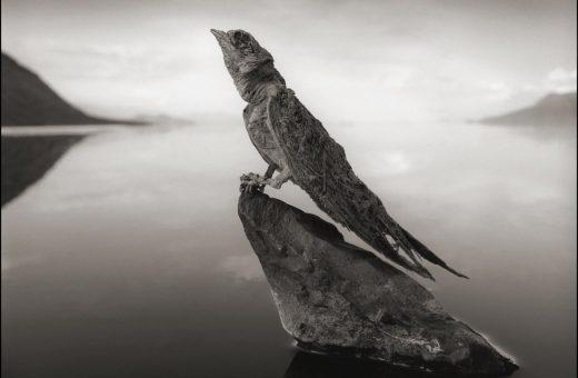 The Calcified, gli animali mummificati di Nick Brandt