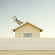Zack Seckler - Humor Photography
