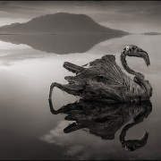 Nick Brandt – The Calcified