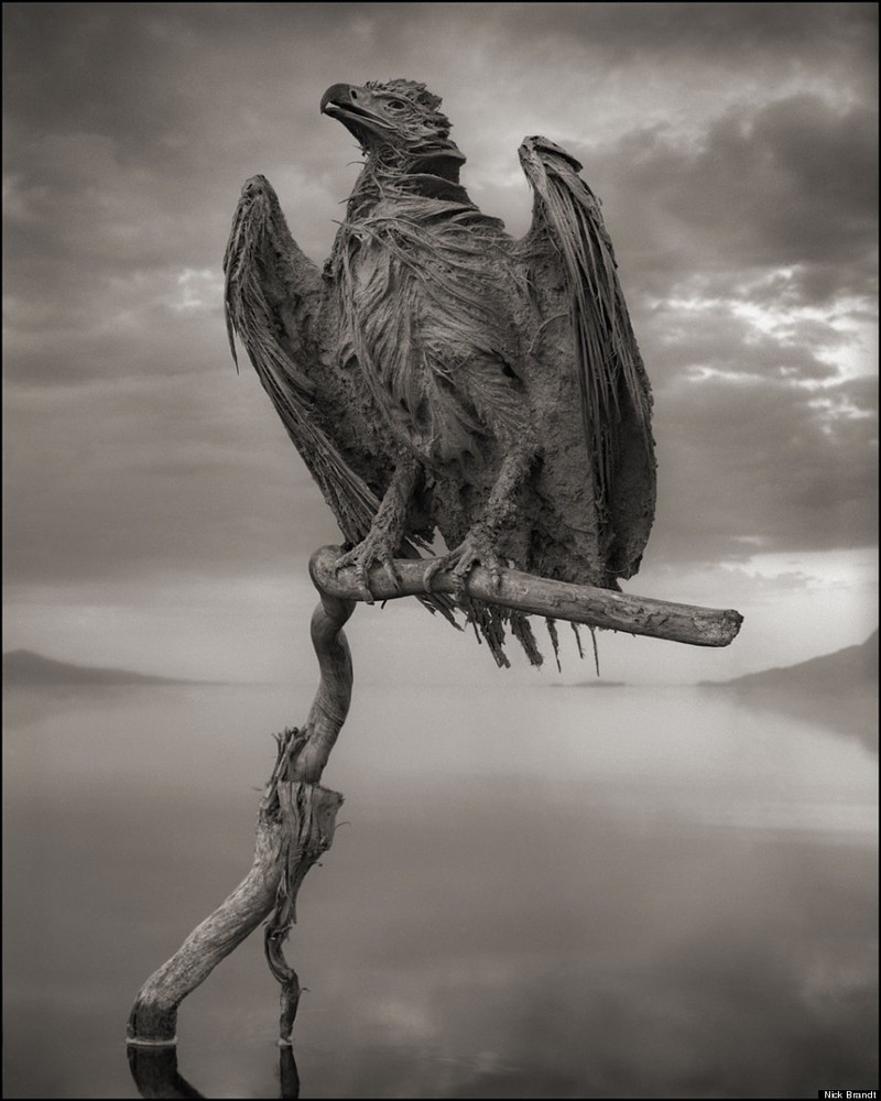 The Calcified, gli animali mummificati di Nick Brandt | Collater.al
