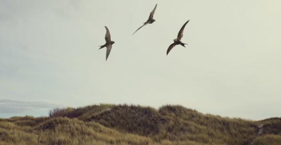Marc Da Cunha Lopes - La Chasse - Serie fotografica sulla caccia