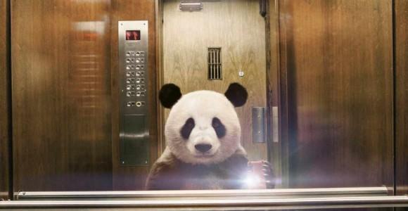 Diomedia/National Geographic - Animal selfie