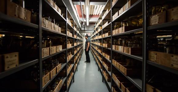 #insideAMNH - Alla scoperta dell'American Museum of Natural History