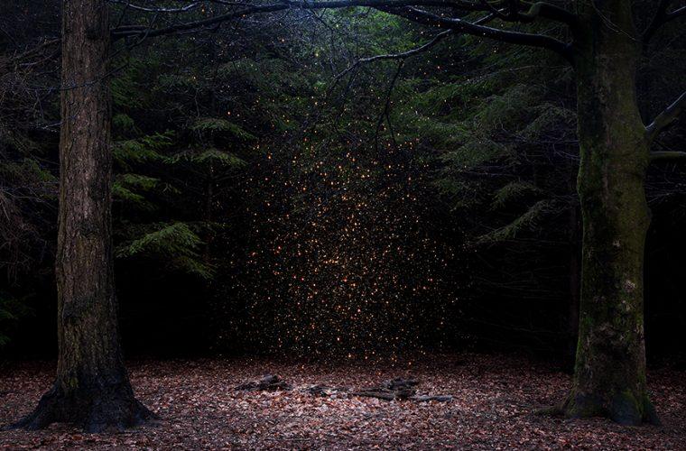 Ellie Davies – Stars
