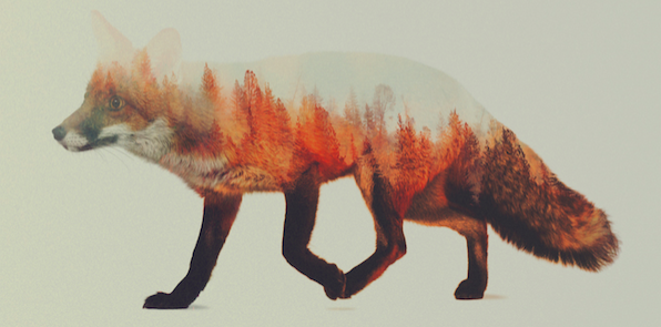 Andreas Lie – Double Exposure Animal