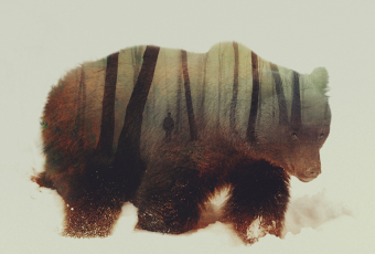 Andreas Lie - Double Exposure Animal