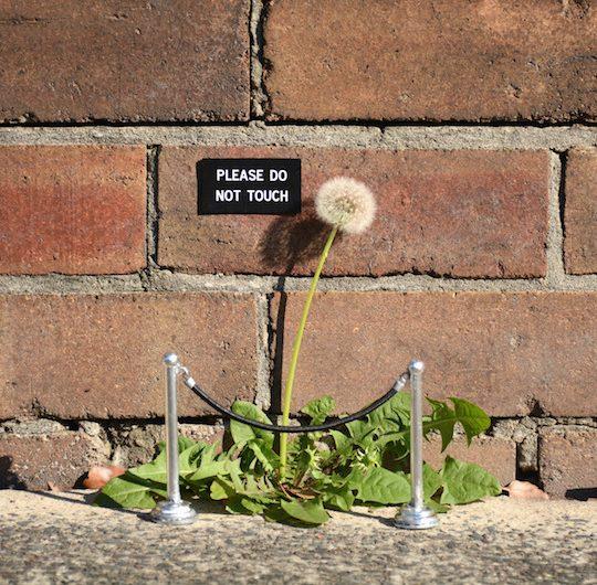 La street art poetica di Miguel Marquez Outside