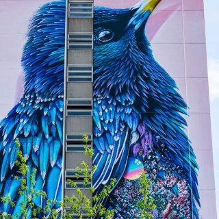 Starling - Lo Storno di Berlino | Collater.al