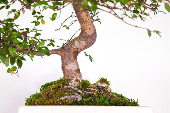 Plant your Mac! - Prodotti Apple trasformati in vasi e fioriere   Collater.al