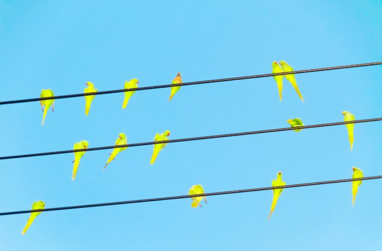Tokyo Parrots – I pappagalli di Tokyo fotografati da Yoshinori Mizutani