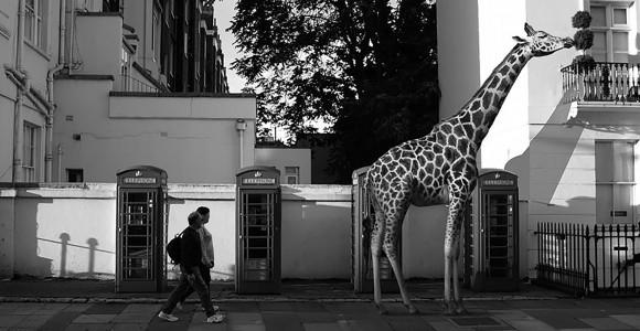 Lo zoo metropolitano di Ceslovas Cesnakevicius | Collater.al