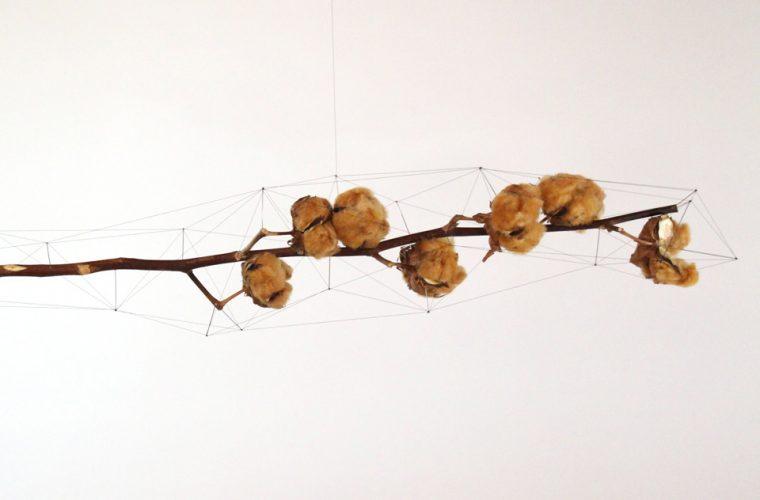 I poligoni di spago che avvolgono oggetti naturali di Norihiko Terayama