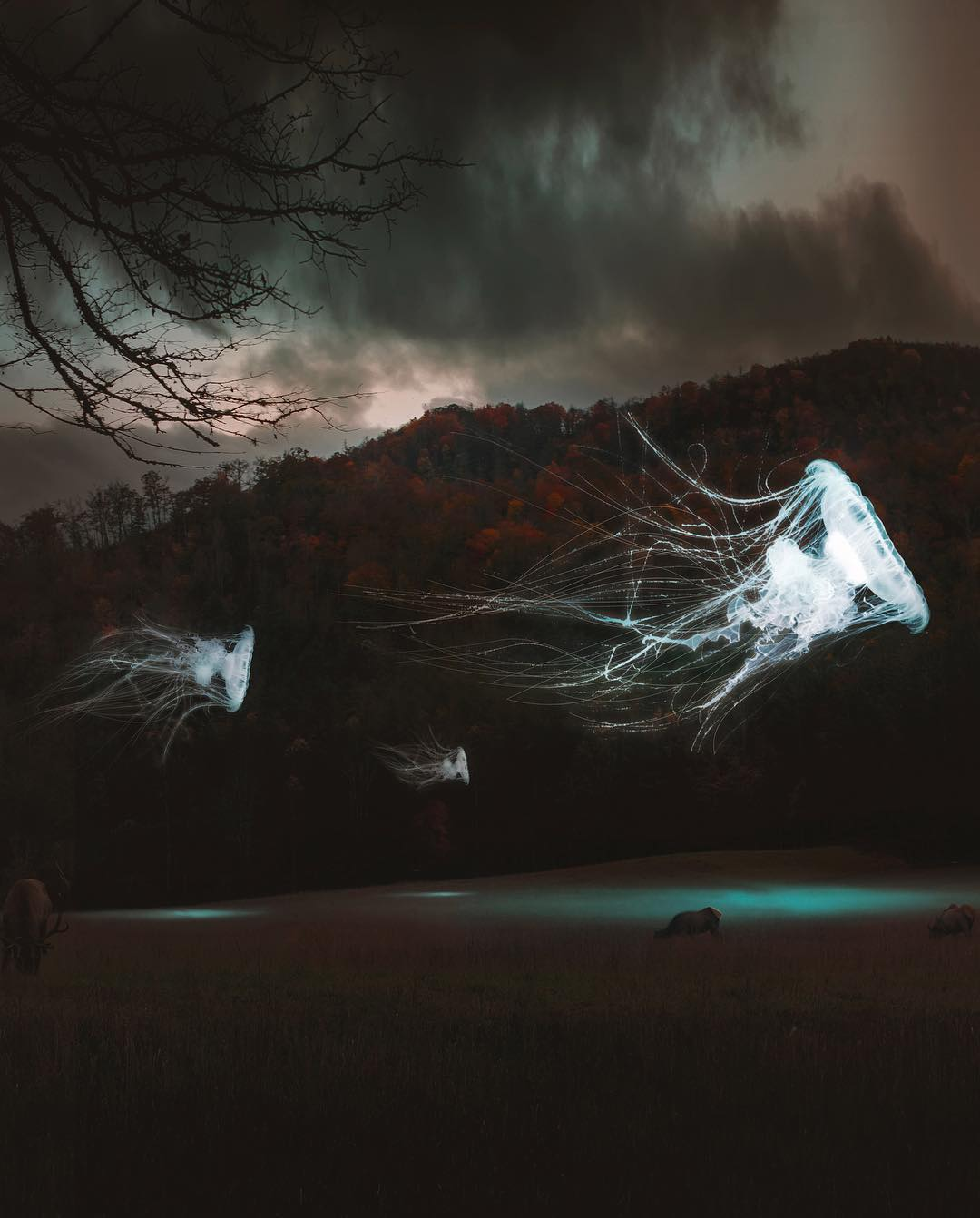Le photo manipulations di Hüseyin Sahin | Collater.al