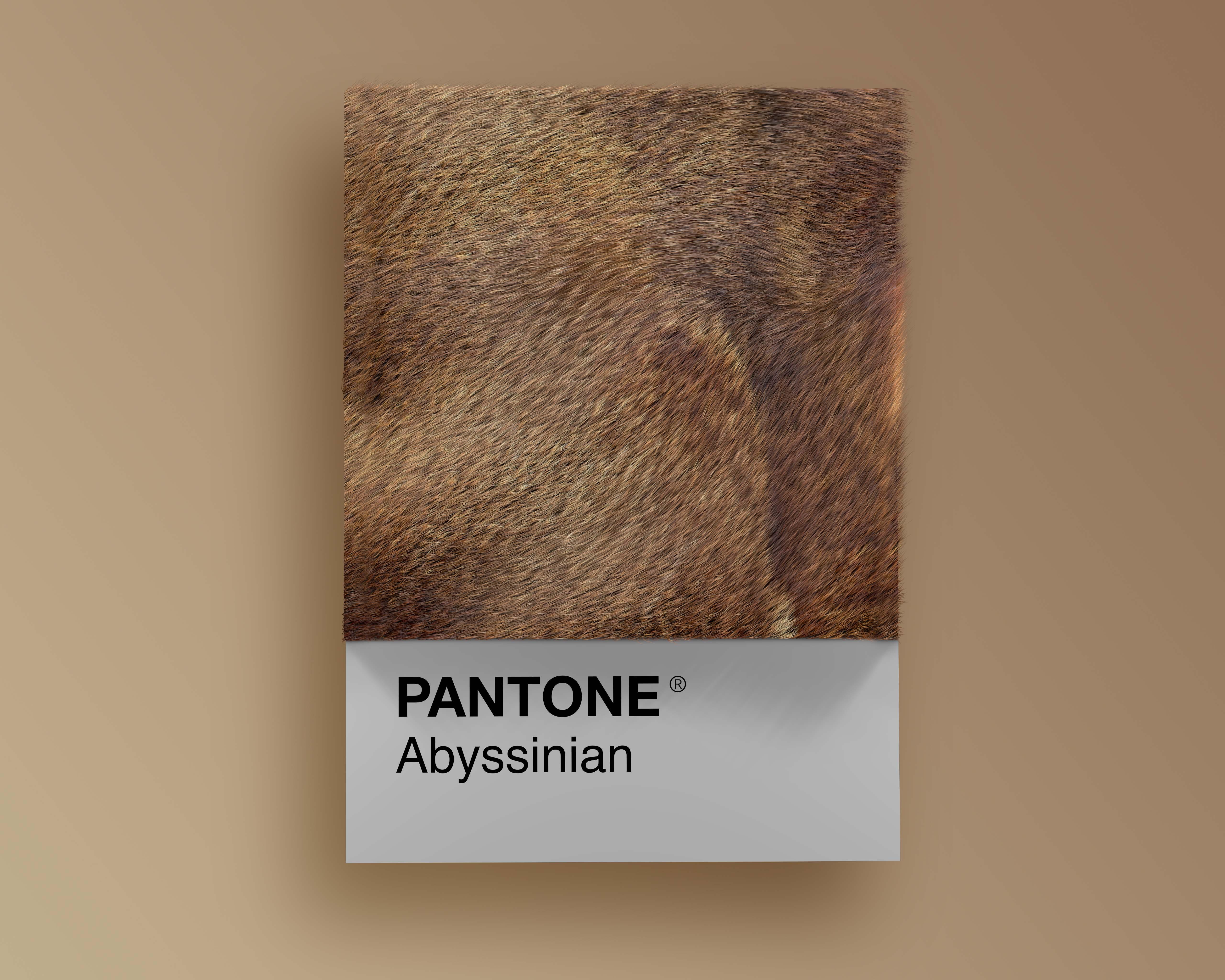 Cat breeds as Pantone, i gatti nei Pantone di Alessio D'Amico | Collater.al