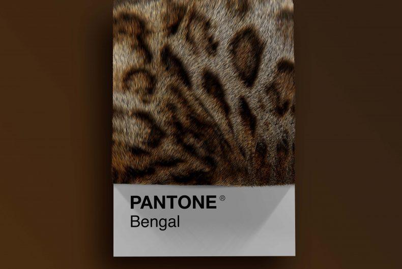 Alessio D'Amico – Cat breeds as Pantone