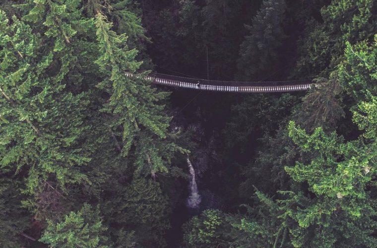 InstHunt – 5 incredibili foreste in giro per il mondo