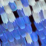 Le ali delle farfalle nelle macrofotografie di Linden Gledhill | Collater.al