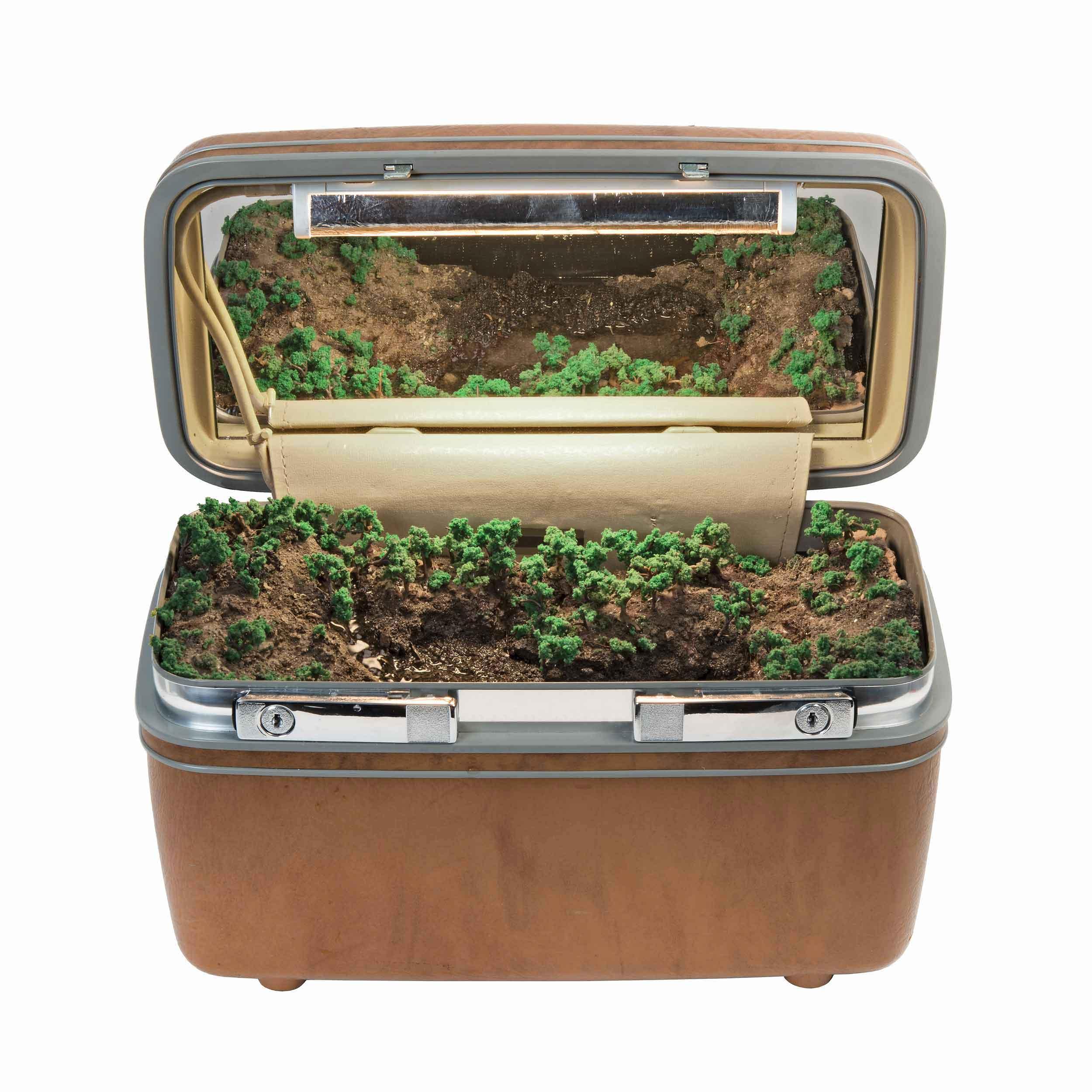 Traveling Landscapes, ecosistemi in miniatura all'interno di valigie vintage | Collater.al