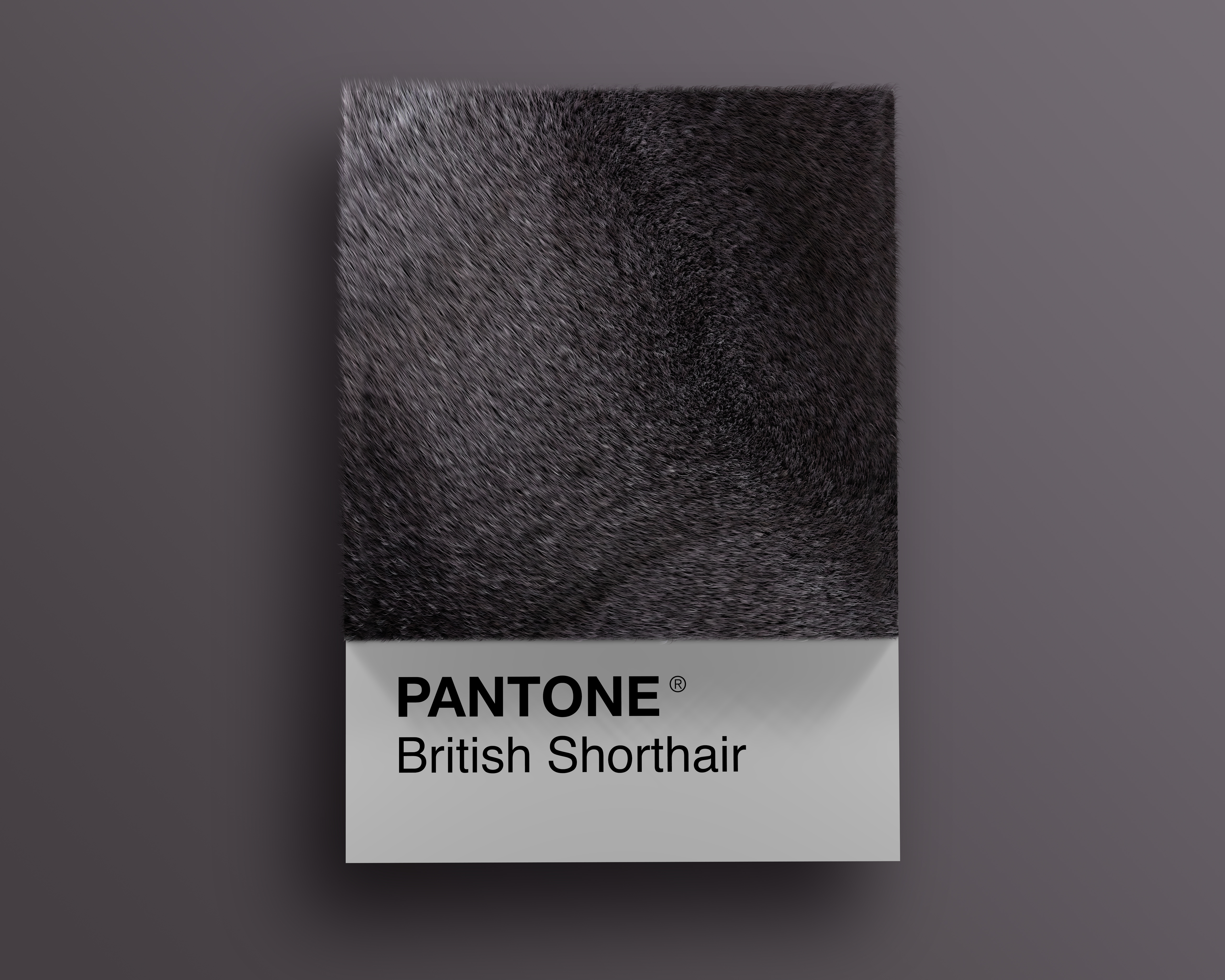 Alessio D'Amico - Cat breeds as Pantone | Collater.al 11