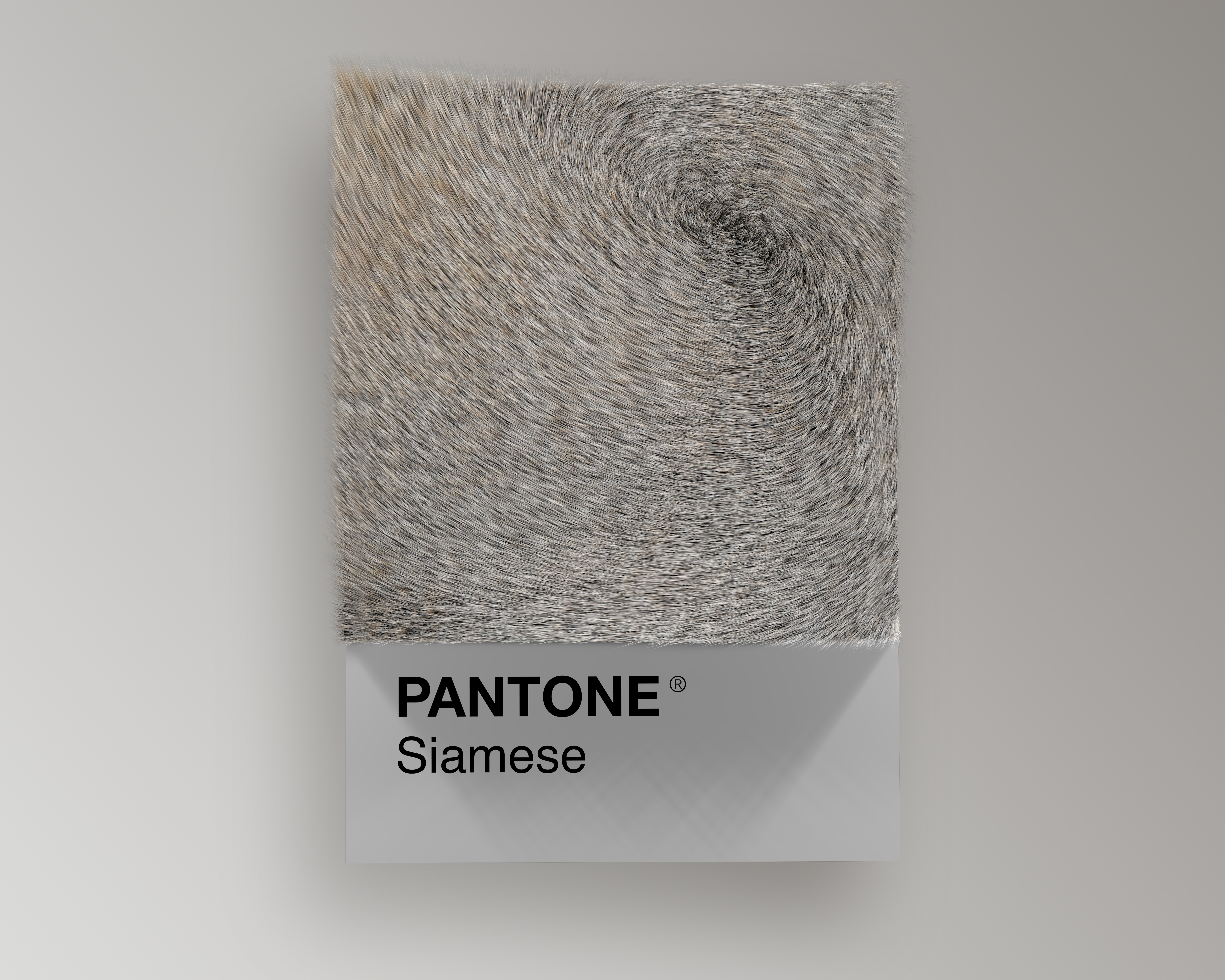 Alessio D'Amico - Cat breeds as Pantone | Collater.al 7