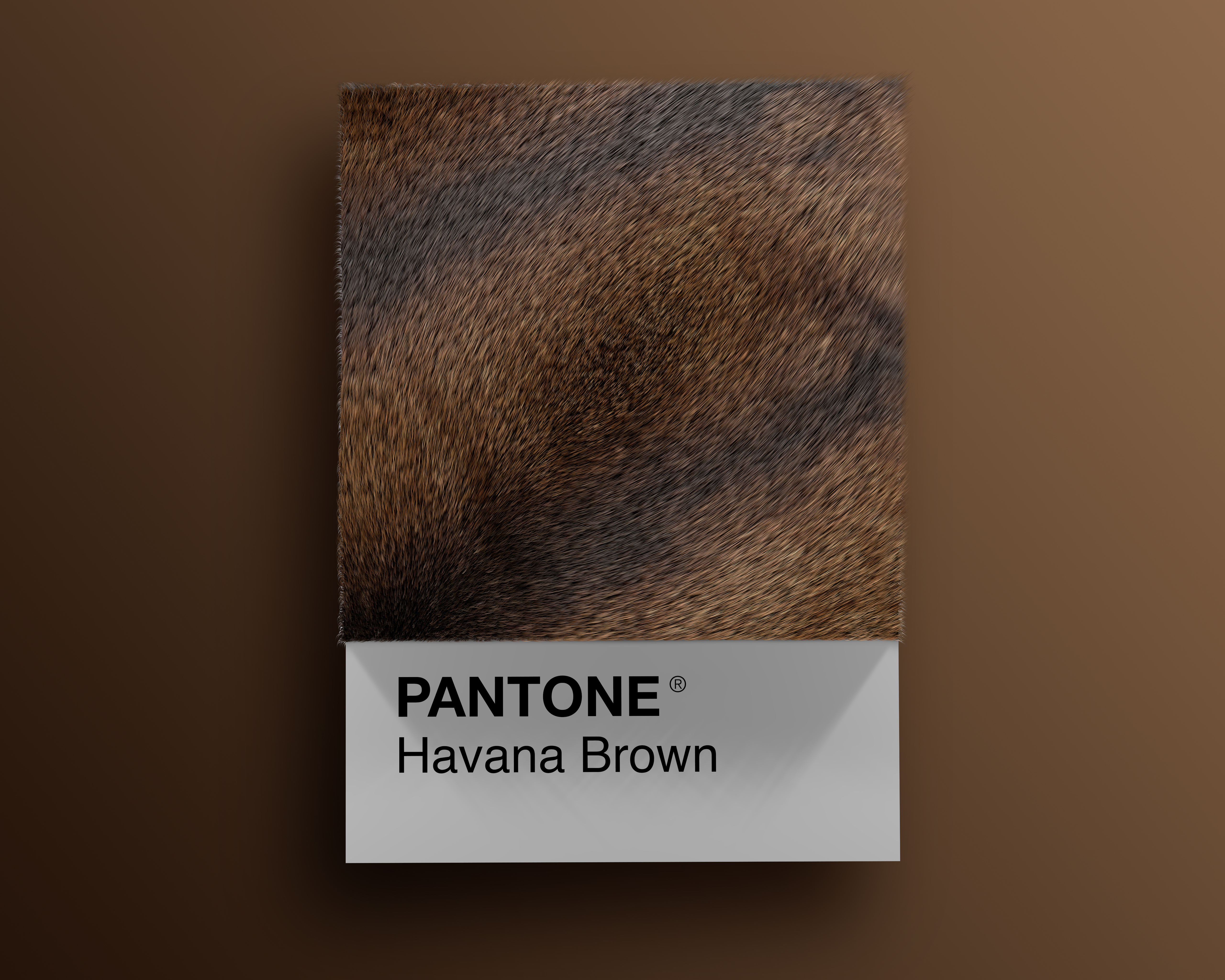 Alessio D'Amico - Cat breeds as Pantone | Collater.al 8