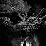 Awakening The Spirit, la poetica di Chrissie White | Collater.al 9