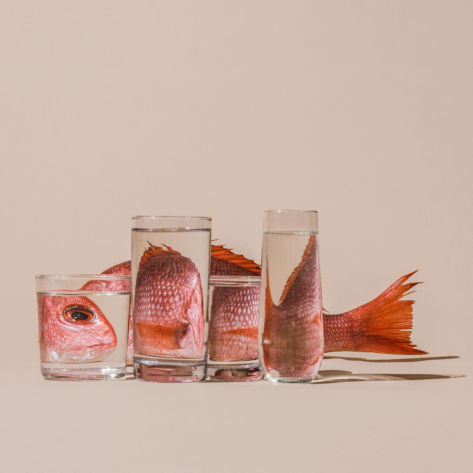 Perspective, le fotografie distorte di Suzanne Saroff   Collater.al 4