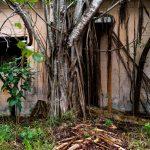 I luoghi abbandonati nella natura di Johnny Joo   Collater.al 3