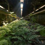 I luoghi abbandonati nella natura di Johnny Joo   Collater.al