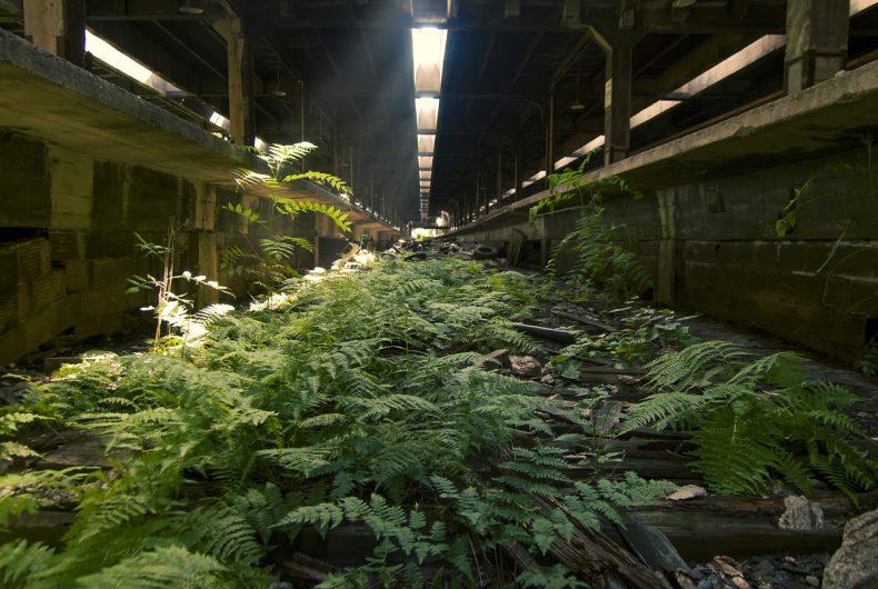 I luoghi abbandonati nella natura di Johnny Joo