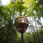 ORIGIN Tree House, la bellissima casa sull'albero di Atelier Levit | Collater.al 2