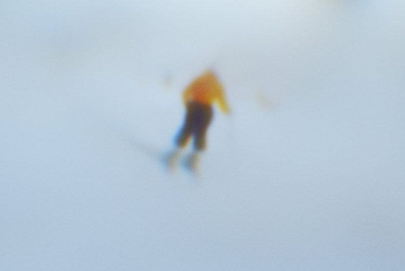 L'account Instagram che mostra il mondo con gli occhi di una sciatrice paralimpica