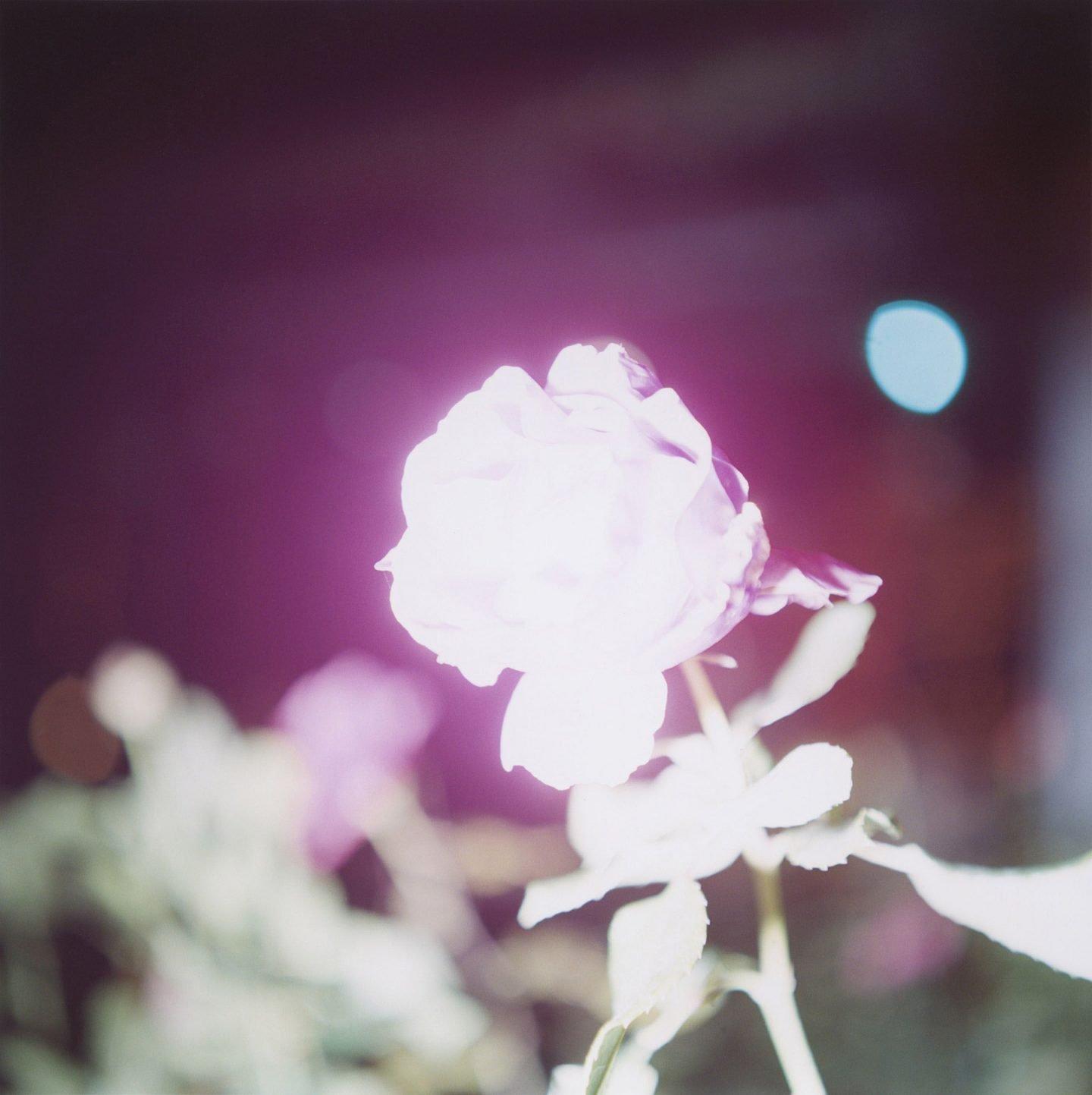 La poesia visiva di Rinko Kawauchi | Collater.al 11