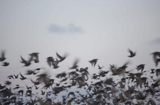 The visual poetry of Rinko Kawauchi