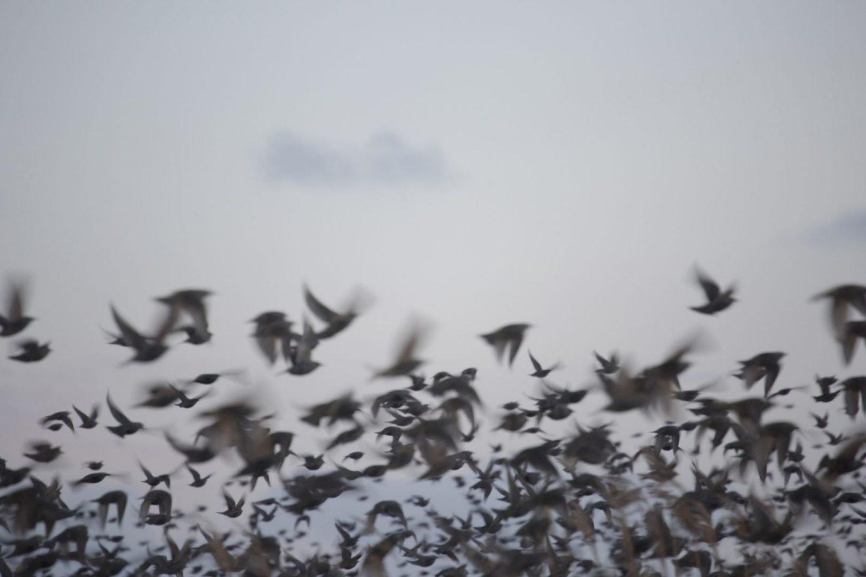La poesia visiva di Rinko Kawauchi | Collater.al 8