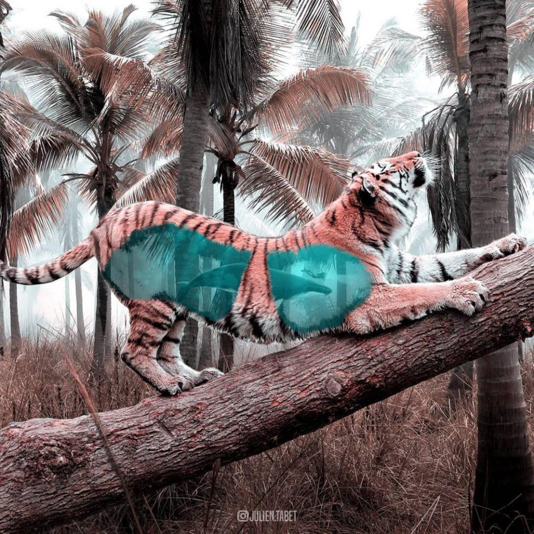 Le creazioni fantastiche di Julien Tabet