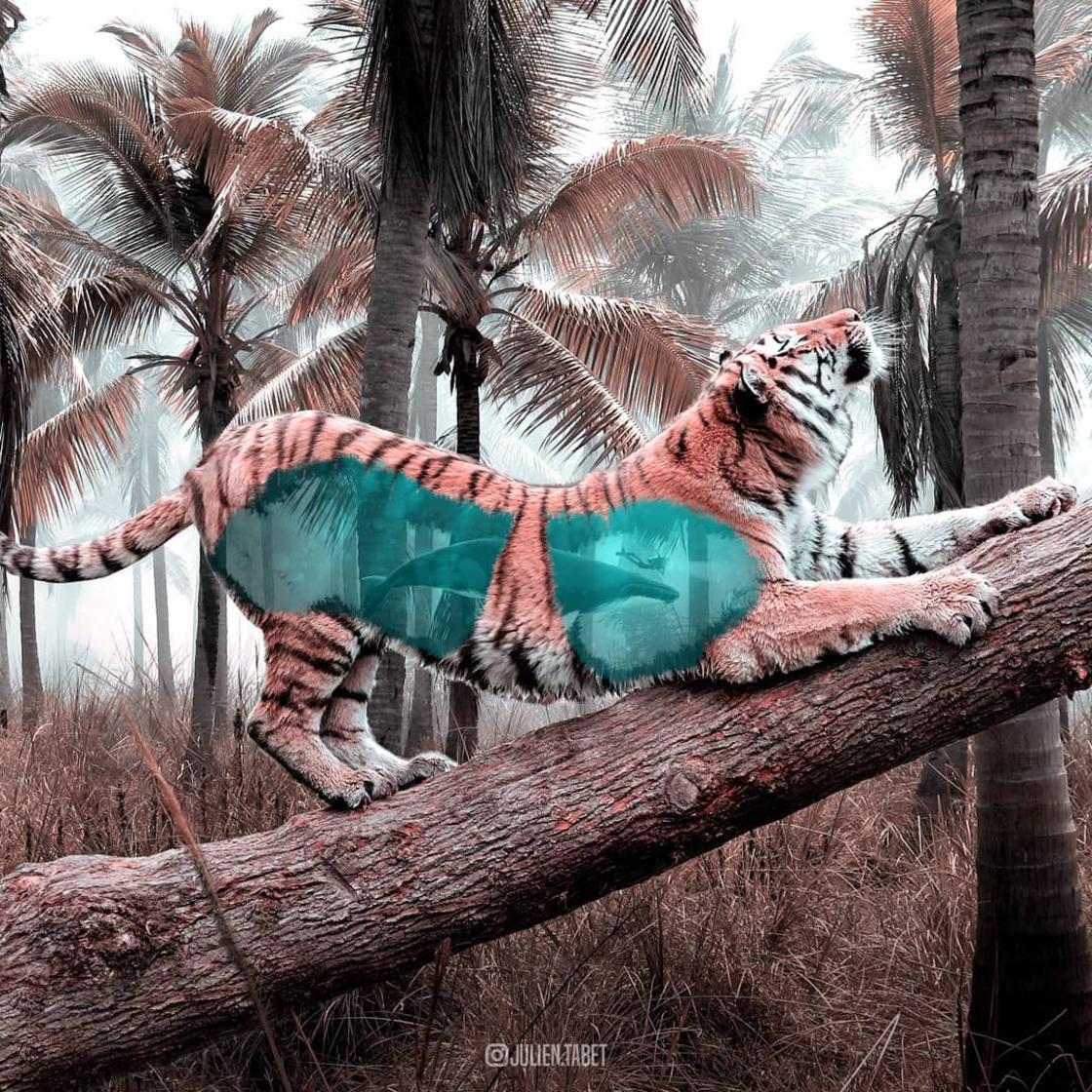 Le creazioni fantastiche di Julien Tabet | Collater.al 11