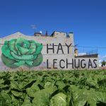 Sensemurs, la scena street in difesa di La Punta | Collater.al 10